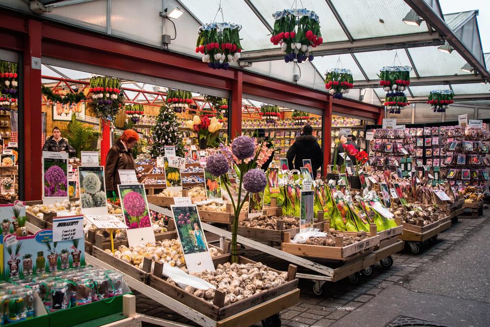amsterdam-visite-marche-fleur2