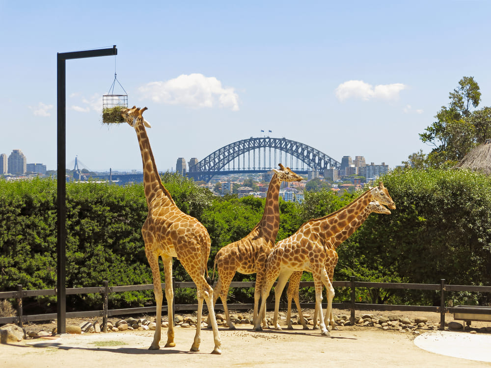 zoo-taronga-sydney-visite (2)