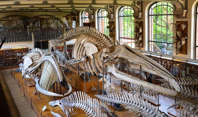 Le Musée d'histoire naturelle toulouse-visite