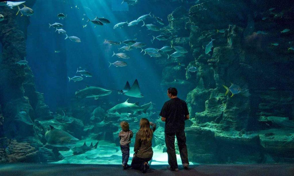 visite-aquarium-montpellier
