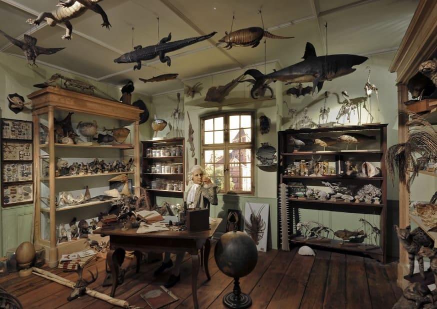 musee-gratuit-strasbourg-zoologie