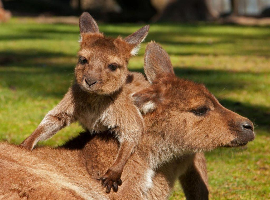 parc-australien-carcassonne-zoo