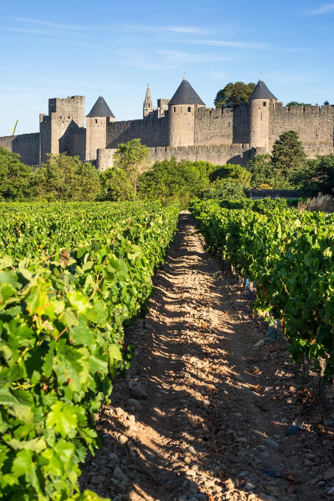 vignoble-region-carcassonne