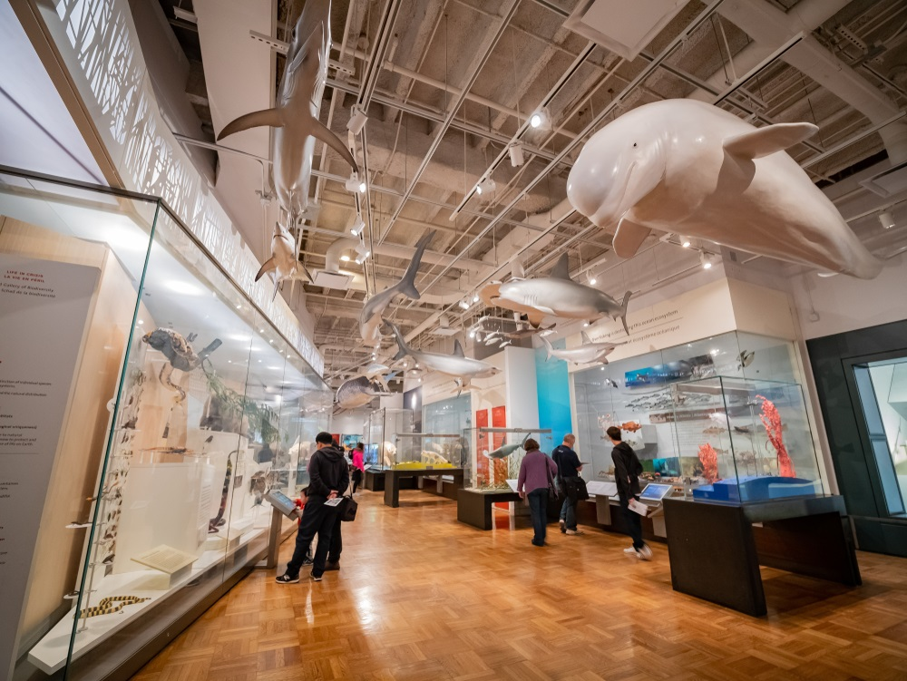 que-visiter-musee-toronto2