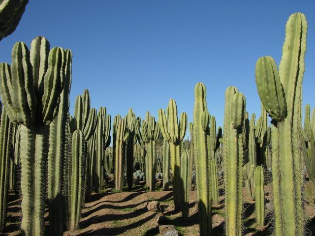 cactus-ferme-marrakech