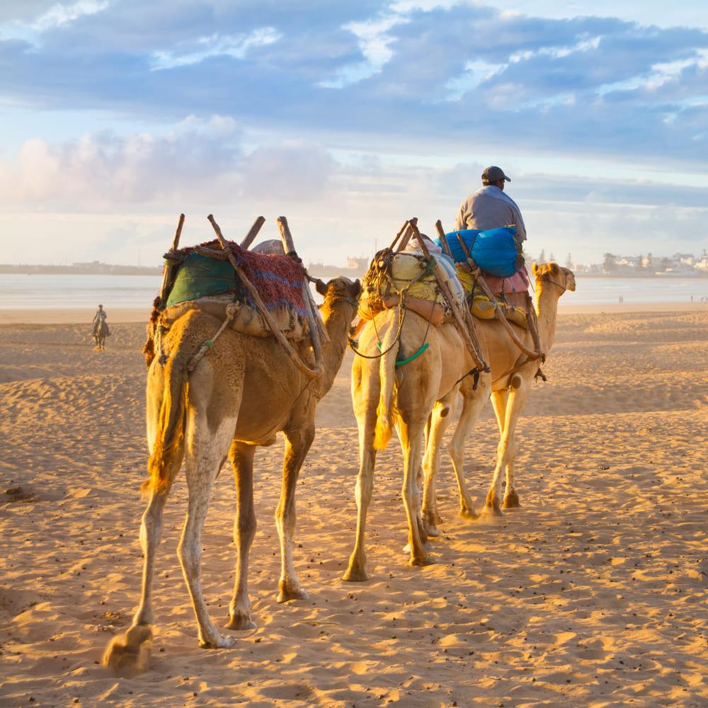 randonnee-chameaux-essaouira
