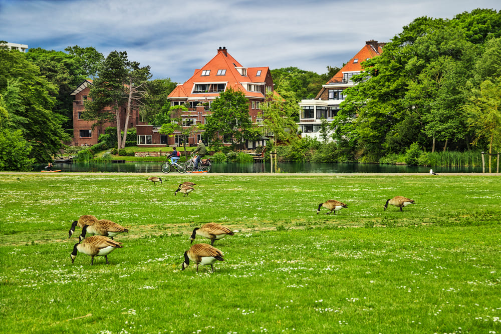 Westbroekpark-parc-la-haye-gratuit
