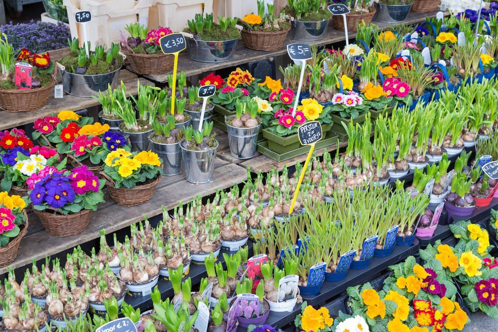 marche-fleurs-gratuit-utrecht
