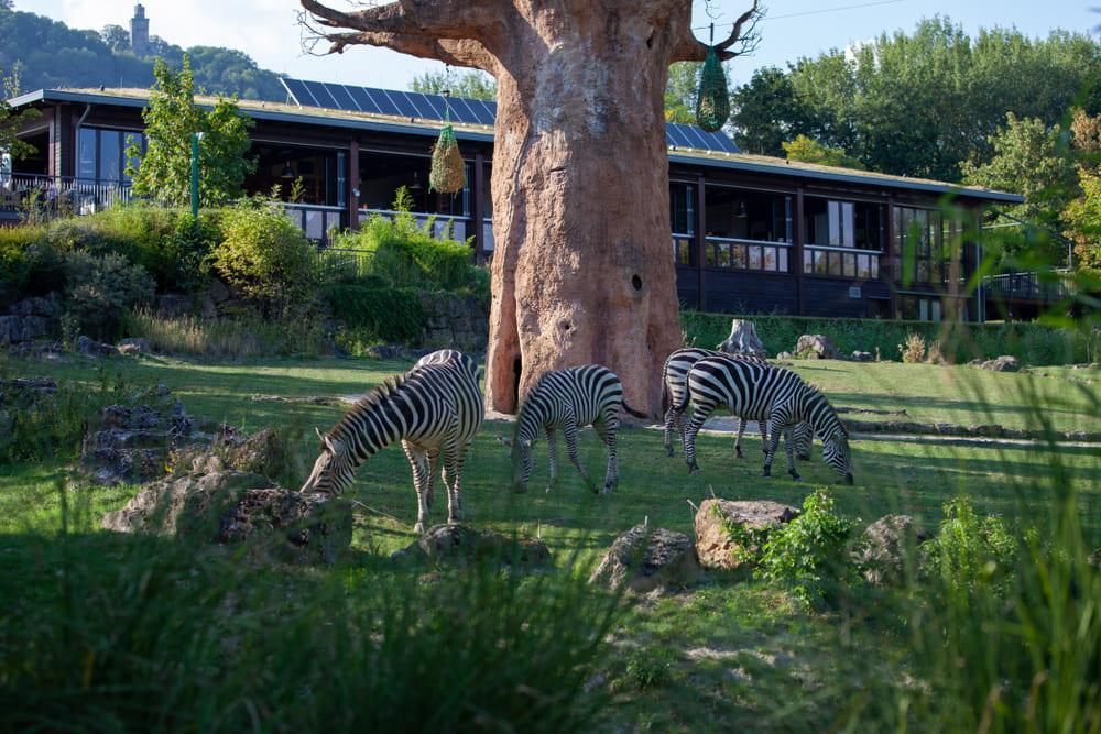 visiter-zoo-francfort